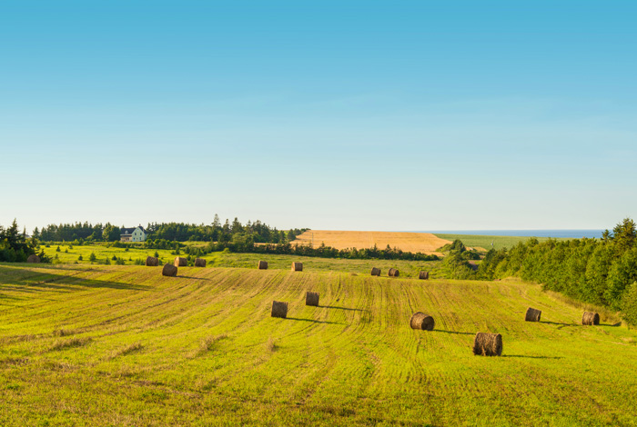プリンスエドワード島の畑の後