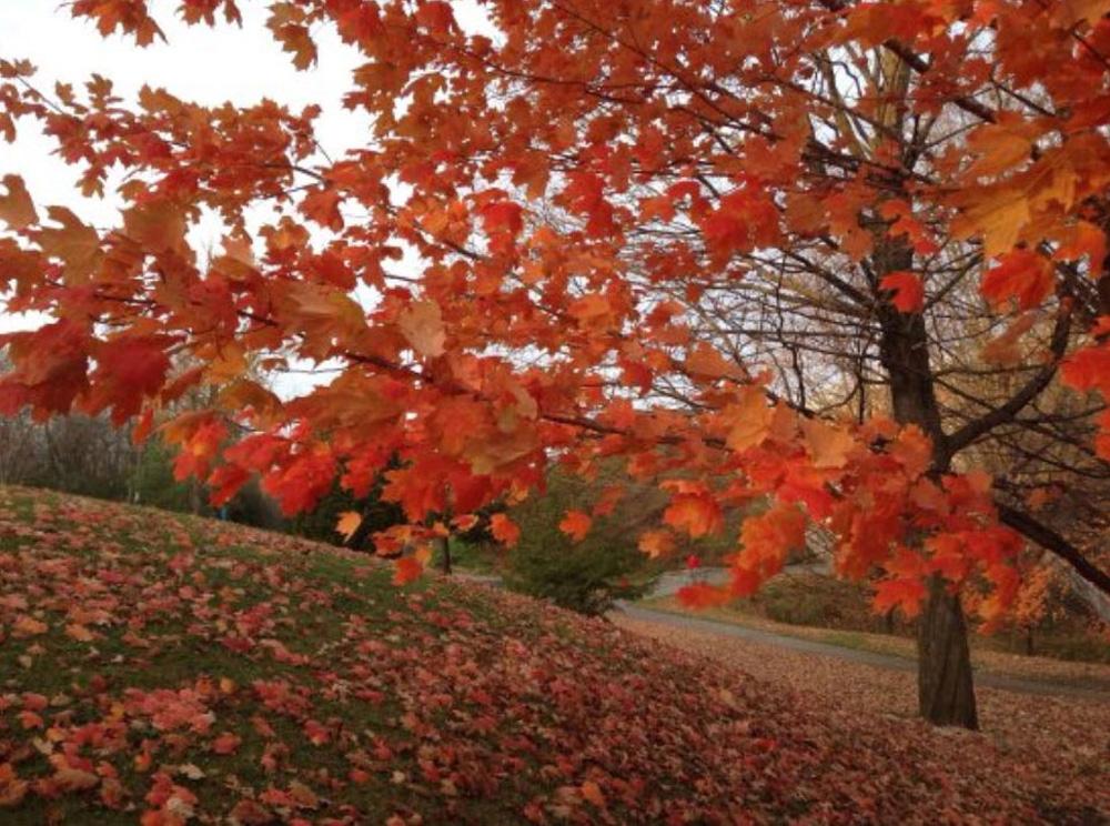 ピーターボロの秋の紅葉