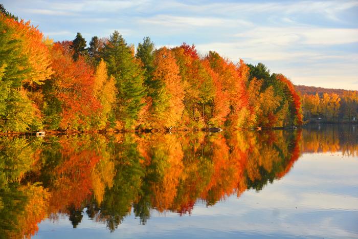 留学に適した国カナダ 美しいメープルの紅葉
