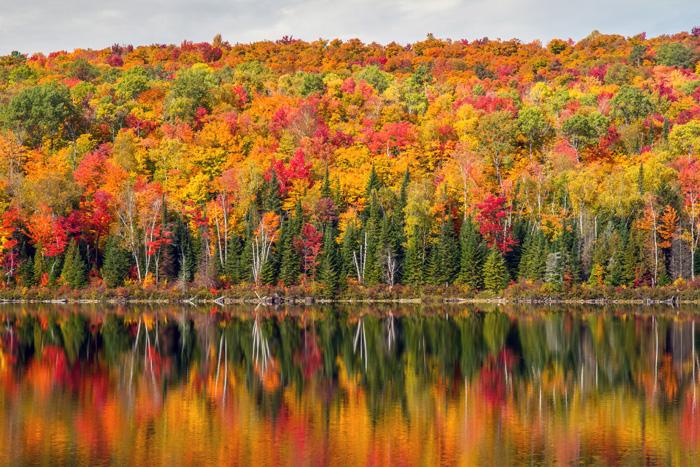 カナダの美しい紅葉
