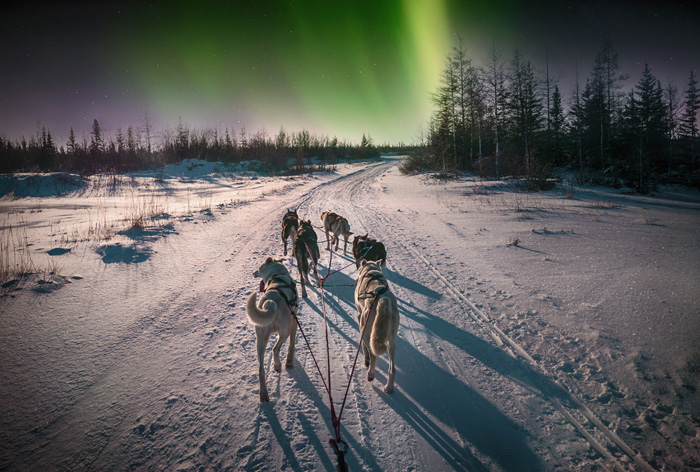 カナダの冬のオーロラと犬ぞり