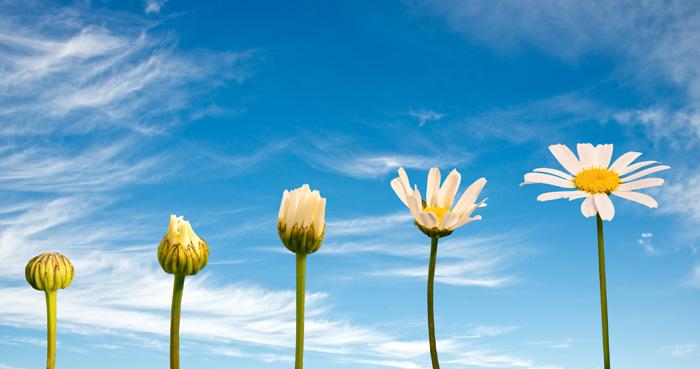 カナダ留学で得られるもの 成長する花