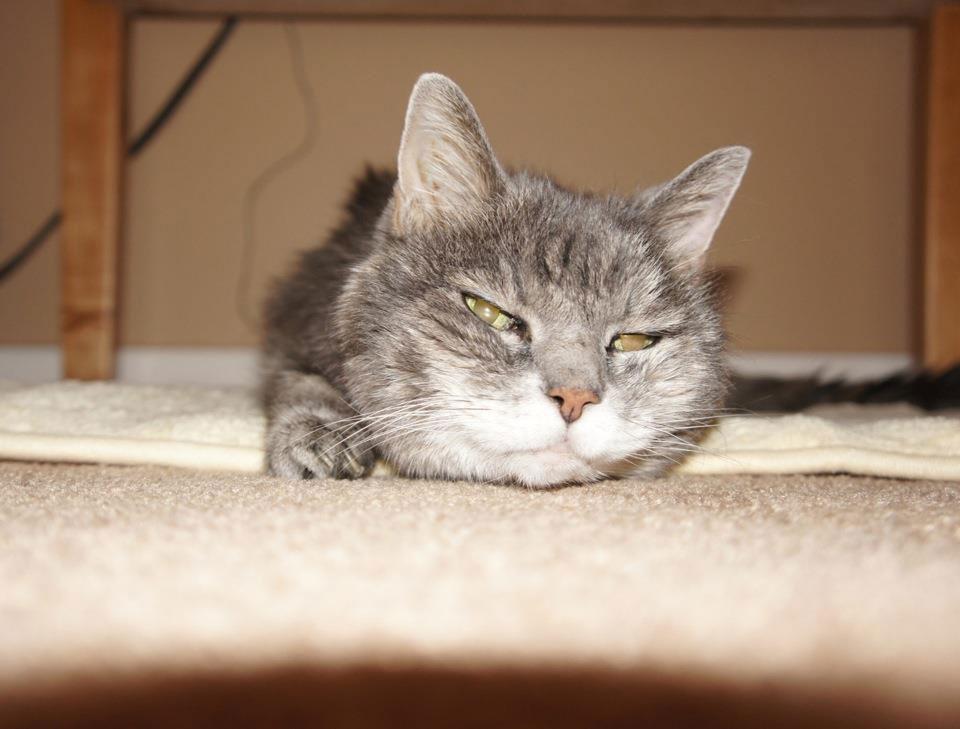 高校卒業留学 カムループス ホスト宅の猫 Makotoさん