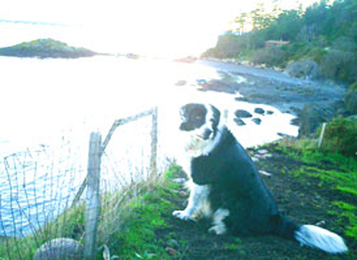 ファームステイ 犬と景色 Tomomiさん